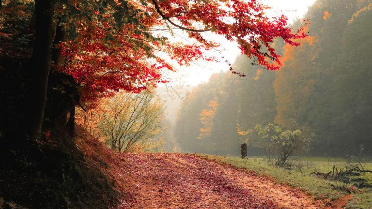 Ganz leise klopft der Herbst schon an-1